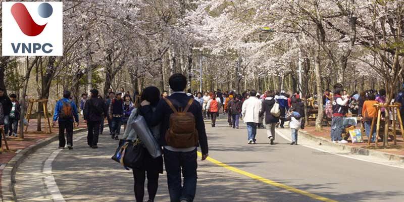 Làm thêm tại Hàn Quốc đối với sinh viên thường sẽ làm những công việc gì? Người không có bằng cấp 3 có đi du học được không?