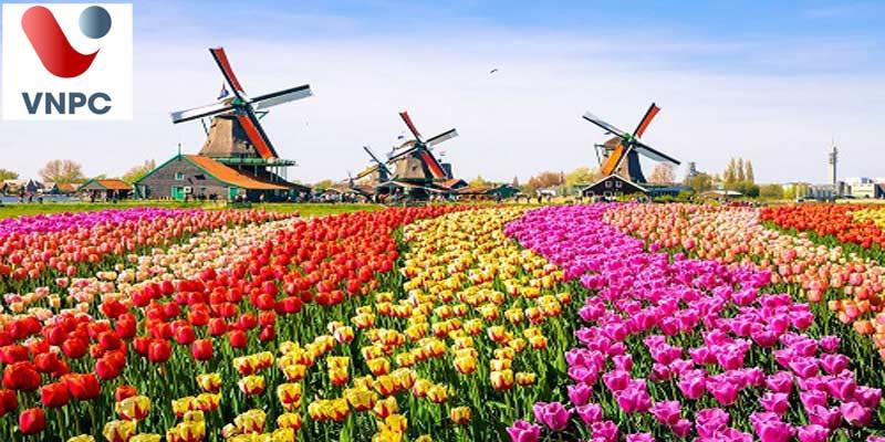 Hai loại trường đại học ở Hà Lan có gì khác nhau và nên chọn trường nào?